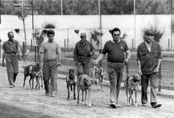 The last greyhound racing track of Spain