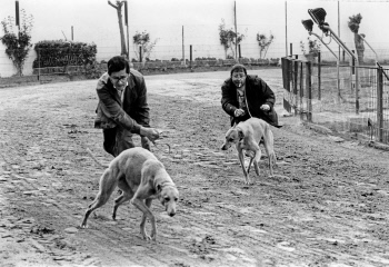 The last greyhound racing track of Spain.