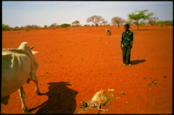 East Africa 2006 Drought